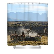 Guanacos In Action Shower Curtain by Camilla Brattemark