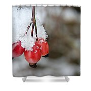 Guelder Rose In The Snow Shower Curtain