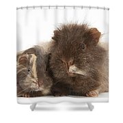 Guinea Pig And Baby Shower Curtain