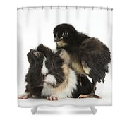 Guinea Pig And Black Bantam Chick Shower Curtain