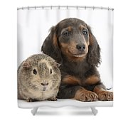 Guinea Pig And Blue-and-tan Dachshund Shower Curtain