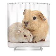 Guinea Pig And Hamster Shower Curtain
