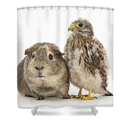 Guinea Pig And Kestrel Chick Shower Curtain