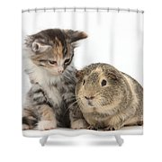 Guinea Pig And Maine Coon-cross Kitten Shower Curtain