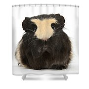 Guinea Pig Shower Curtain