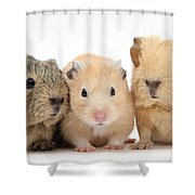 Guinea Pigs And Hamster Shower Curtain