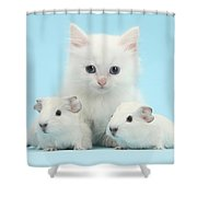 Guinea Pigs And Maine Coon-cross Kitten Shower Curtain