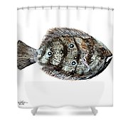 Gulf Flounder Shower Curtain