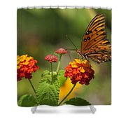 Gulf Fritillary Butterfly On Colorful Lantana  Shower Curtain