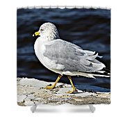 Gull 2 Shower Curtain
