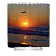 Gull Coast Shower Curtain