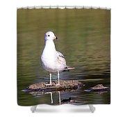 Gull - Don't Get Wet Feet Shower Curtain