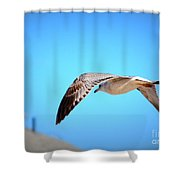 Gull On The Wing Shower Curtain