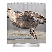 Gull Taking Off Shower Curtain