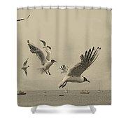 Gulls Shower Curtain