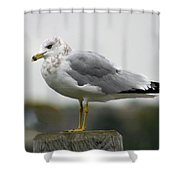 Gullwatch Shower Curtain