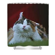 Gusty 19980 Shower Curtain