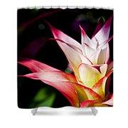 Guzmania Apache Flower Shower Curtain
