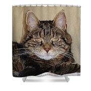 Gypsy 0007 Shower Curtain