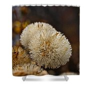 Hairy Aster Shower Curtain
