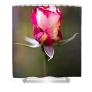 Half-a-rose Shower Curtain
