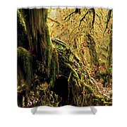 Hall Of Mosses Shower Curtain