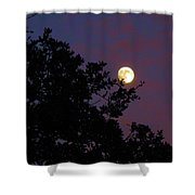 Halloween Moon 2009 Shower Curtain