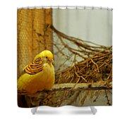Halloween Yellow Bird Shower Curtain