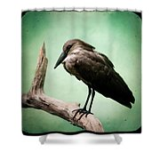 Hamerkop Shower Curtain
