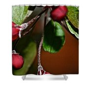 Hanging By A Stem Shower Curtain