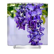 Hanging Purple Passion Shower Curtain