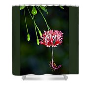 Hanging Coral Hibiscus Shower Curtain