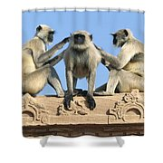 Hanuman Langurs Grooming Shower Curtain