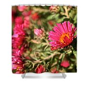 Happy Aster Shower Curtain