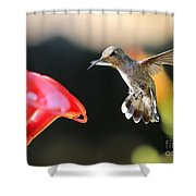 Happy Hummingbird Shower Curtain