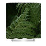 Hapuu Pulu Hawaiian Tree Fern - Cibotium Splendens Shower Curtain
