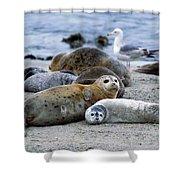 Harbor Seal Phoca Vitulina Mother Shower Curtain