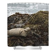 Harbor Seal  Point Lobos State Reserve Shower Curtain by Sebastian Kennerknecht