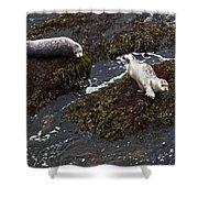 Harbor Seals Shower Curtain