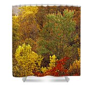 Hardwood Forest With Maple And Oak Shower Curtain