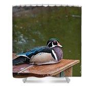 Harlequin Duck Shower Curtain