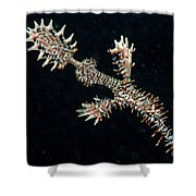 Harlequin Ghost Pipefish With Fins Shower Curtain