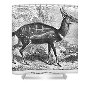 Harnessed Antelope Shower Curtain