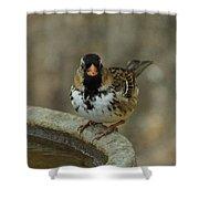 Harris's Sparrow Shower Curtain