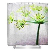 Harvest Starburst 2 Shower Curtain by Linda Woods