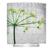 Harvest Starbust 3 Shower Curtain