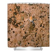 Harvestman Crosbyella Sp. In Cave Shower Curtain