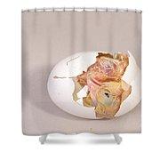 Hatching Chicken 10 Of 22 Shower Curtain