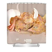 Hatching Chicken 19 Of 22 Shower Curtain