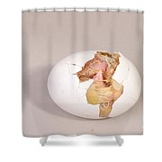 Hatching Chicken 8 Of 22 Shower Curtain